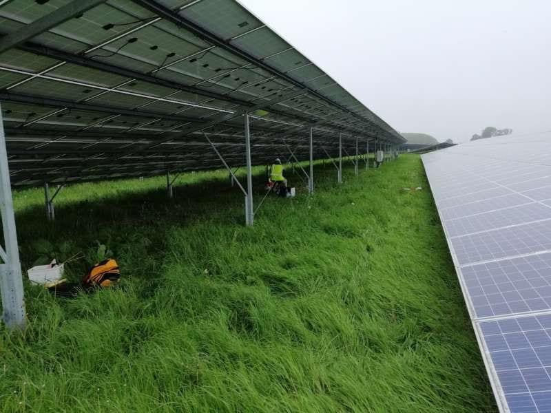 Ecologisch-onderzoek-op-onze-zonneparken